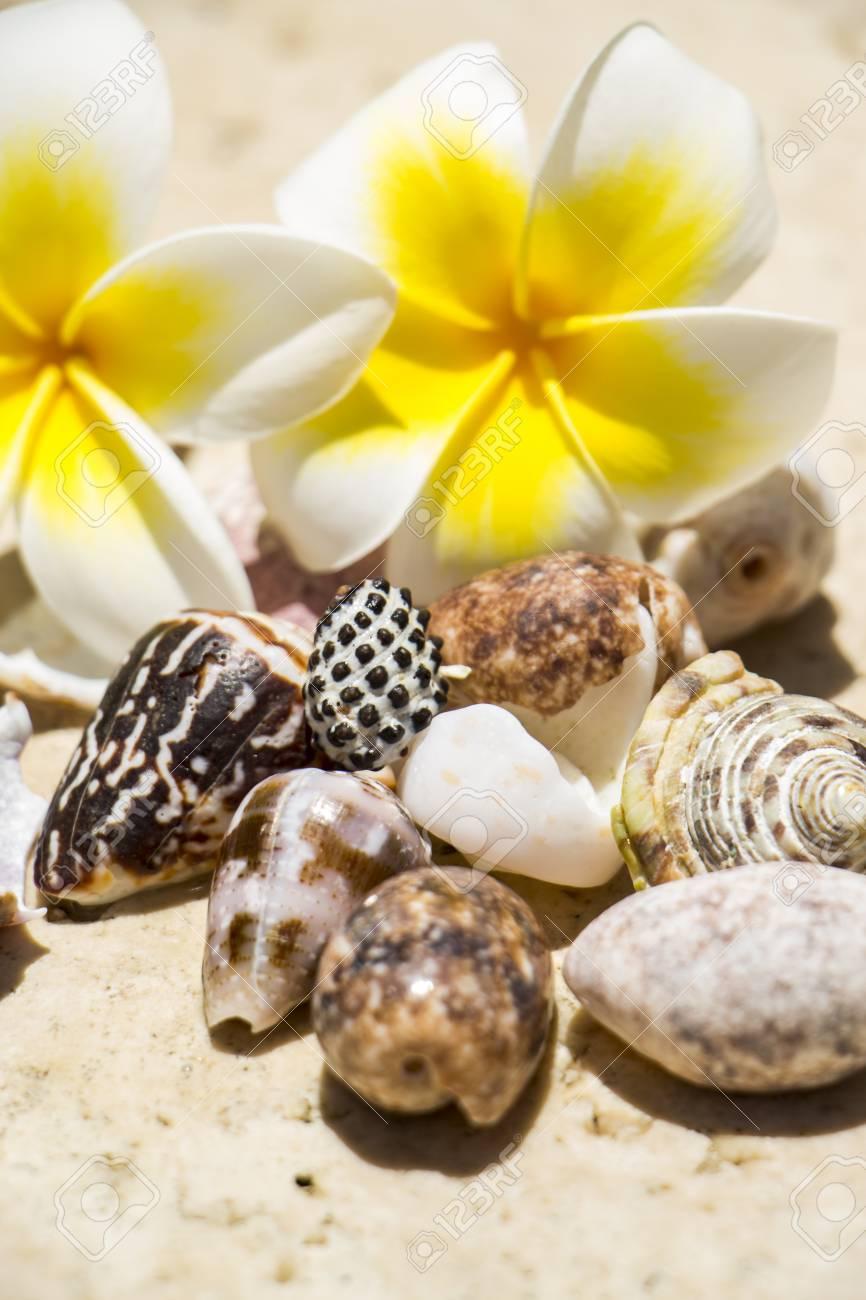 Bastante Flores Fragantes Blancas Y Amarillas Del Frangipani O Plumeria Con Una Colección De Conchas Surtidos En Una Playa Conceptuales De Unas