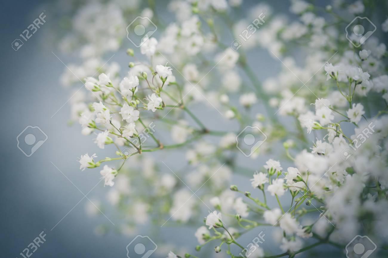 Close up view of white fresh gypsophila flowers stock photo picture close up view of white fresh gypsophila flowers stock photo 96256867 mightylinksfo