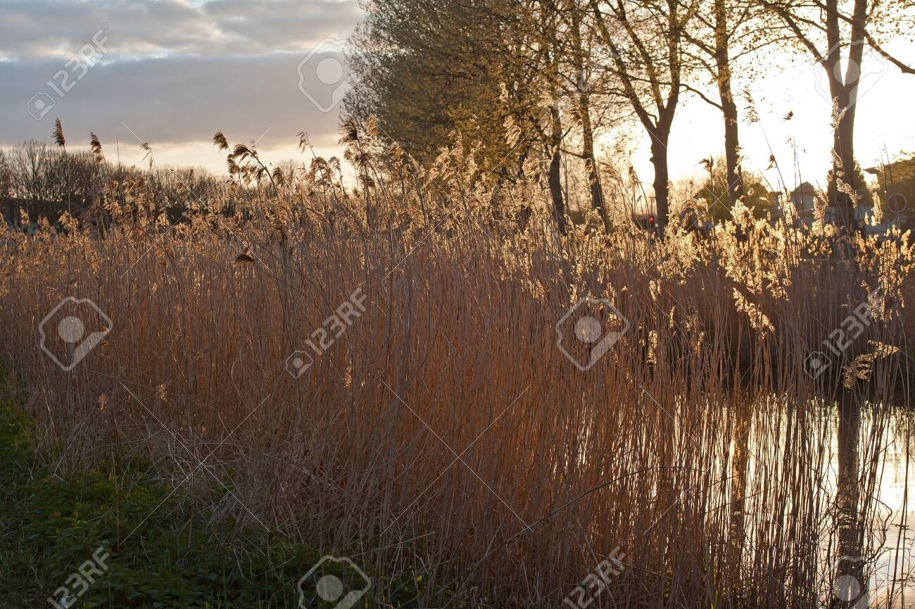 Sunset over a canal in a residence Stock Photo - 13235827