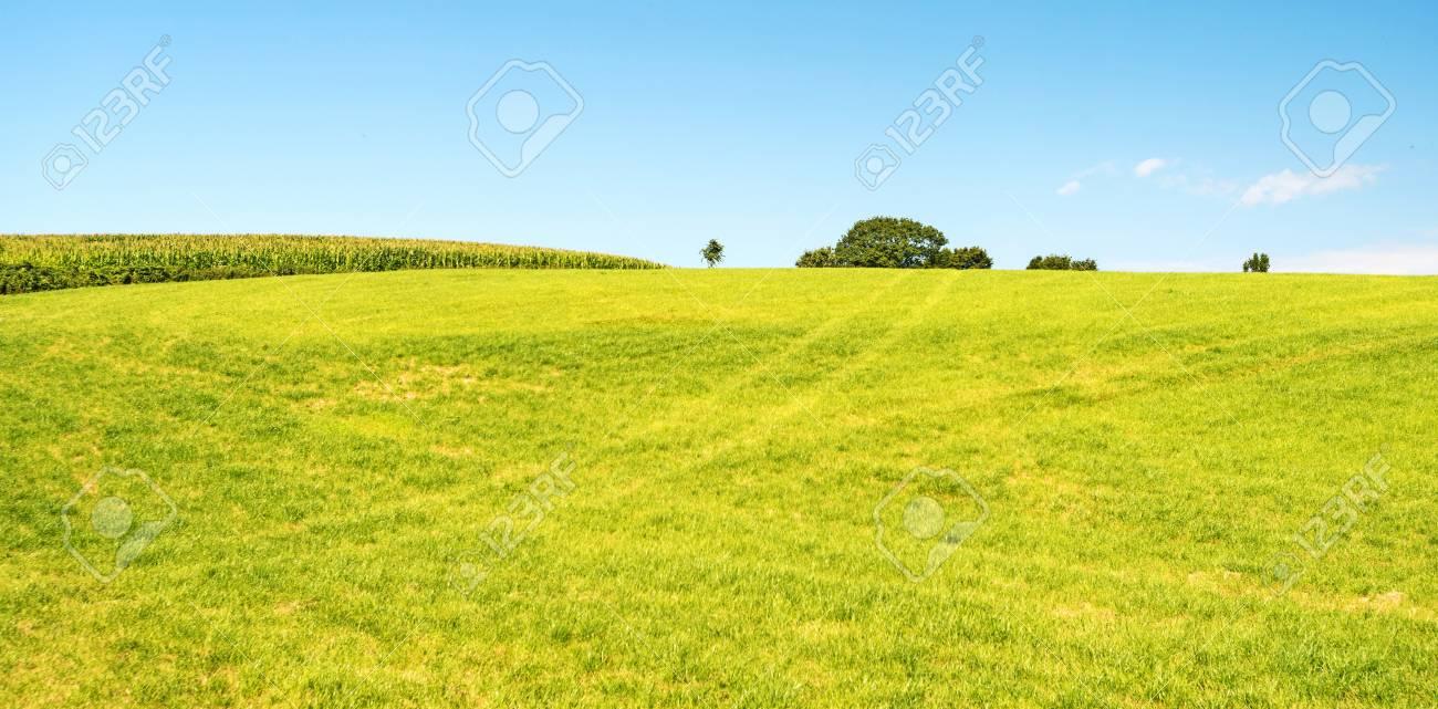 Rural landscape in summer Stock Photo - 14766820