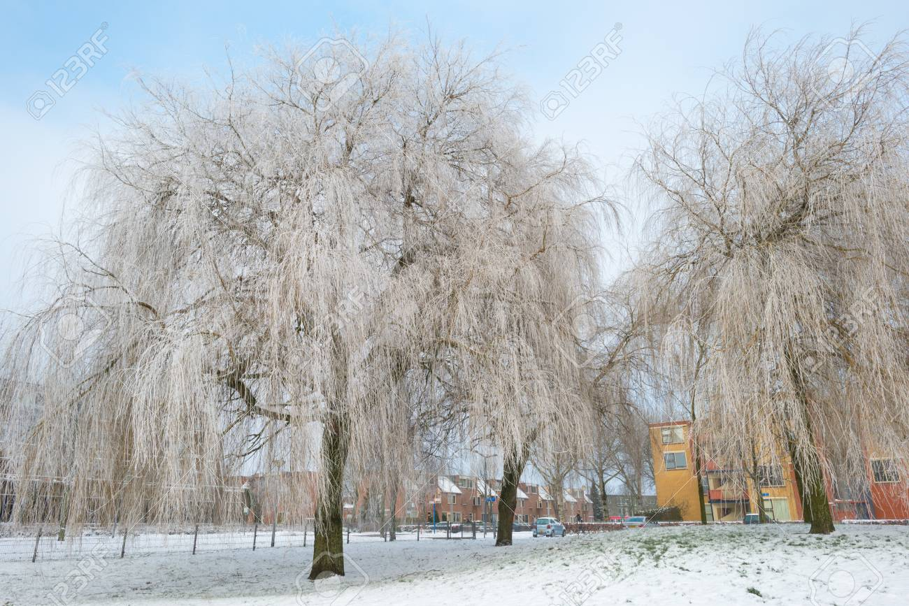 Trees in a snowy park along a lake Stock Photo - 17376864