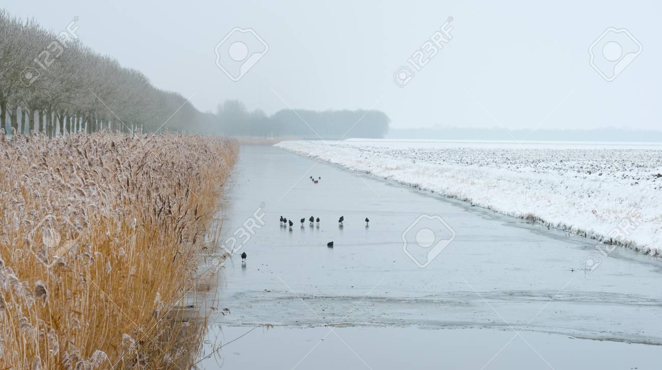 Birds walking on a frozen canal in winter Stock Photo - 17376503