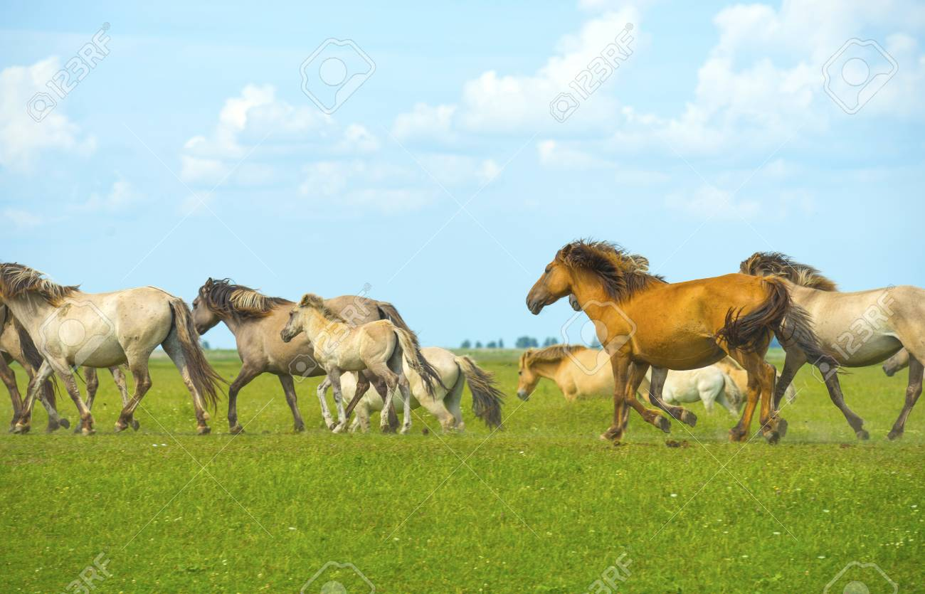 Herd Of Wild Horses Running In A Field Stock Photo Picture And Royalty Free Image Image 42687491