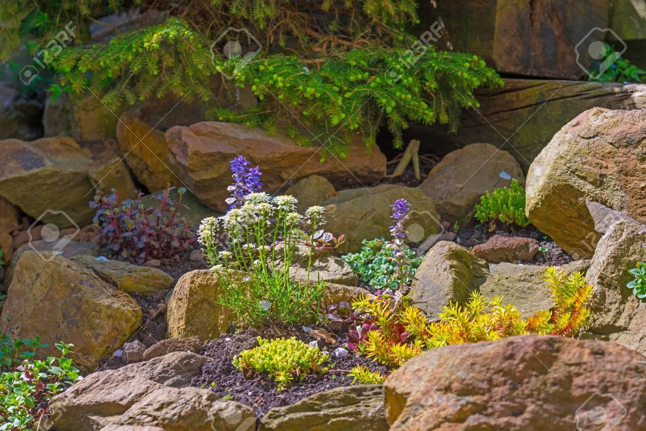 Blumen Im Steingarten Im Frühling Lizenzfreie Fotos, Bilder Und ...