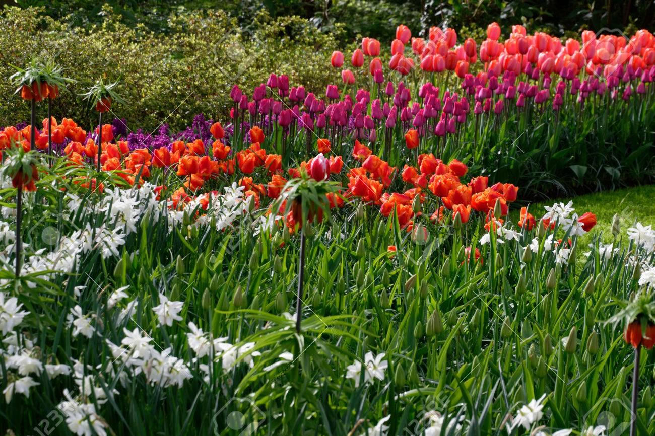 flower in nederland - 84501244
