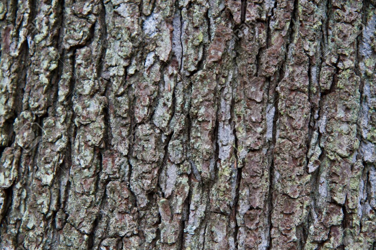 Close up of textured tree bark Stock Photo - 12965572