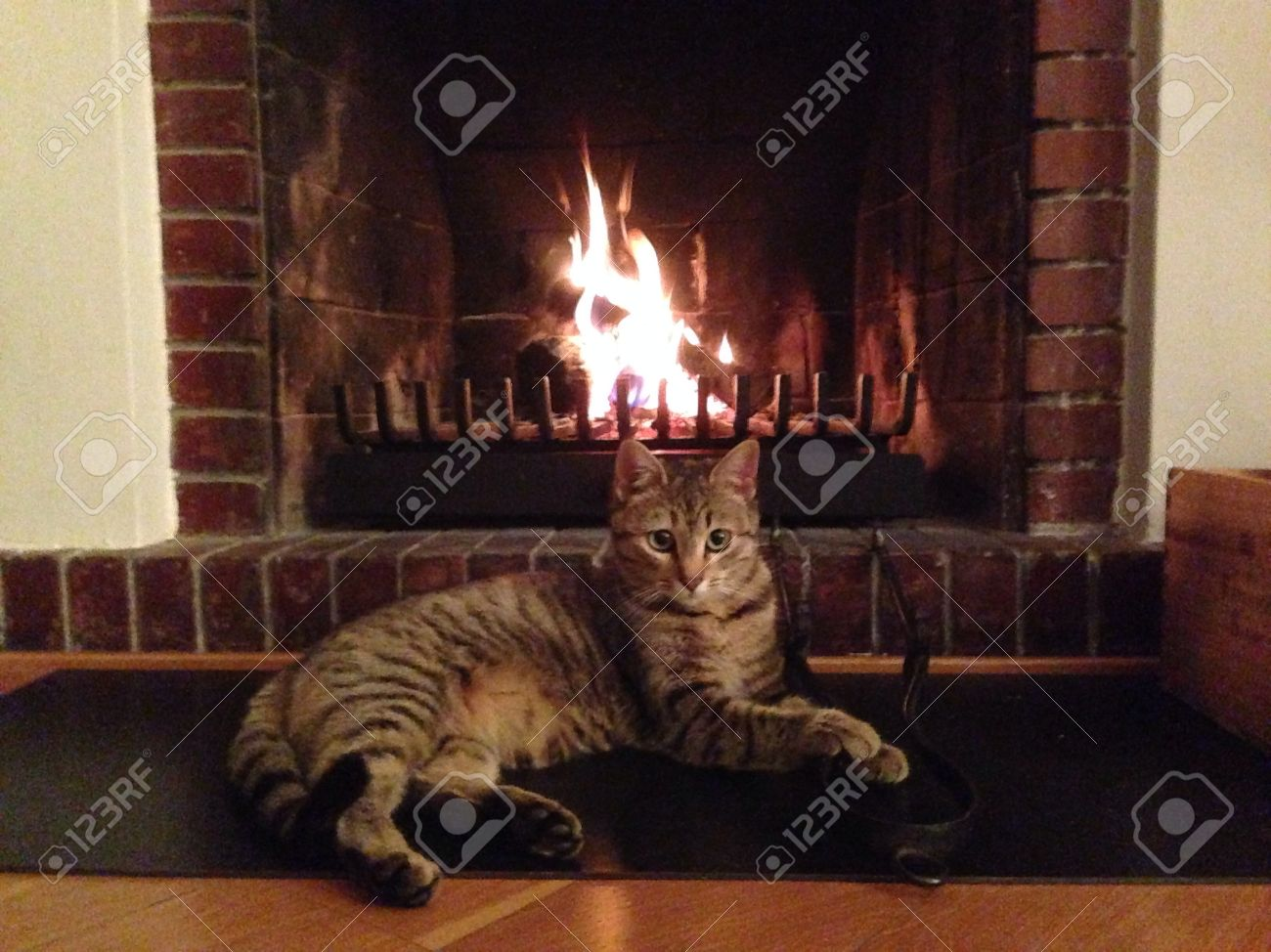 cat curled up on the carpet in front of a roaring fire stock photo