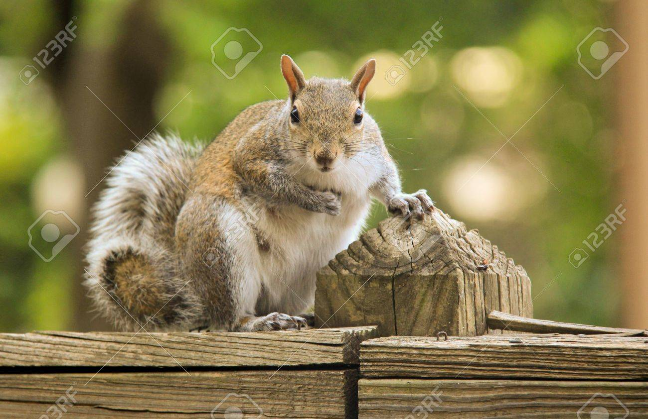 Eichhörnchen auf dem Gesicht