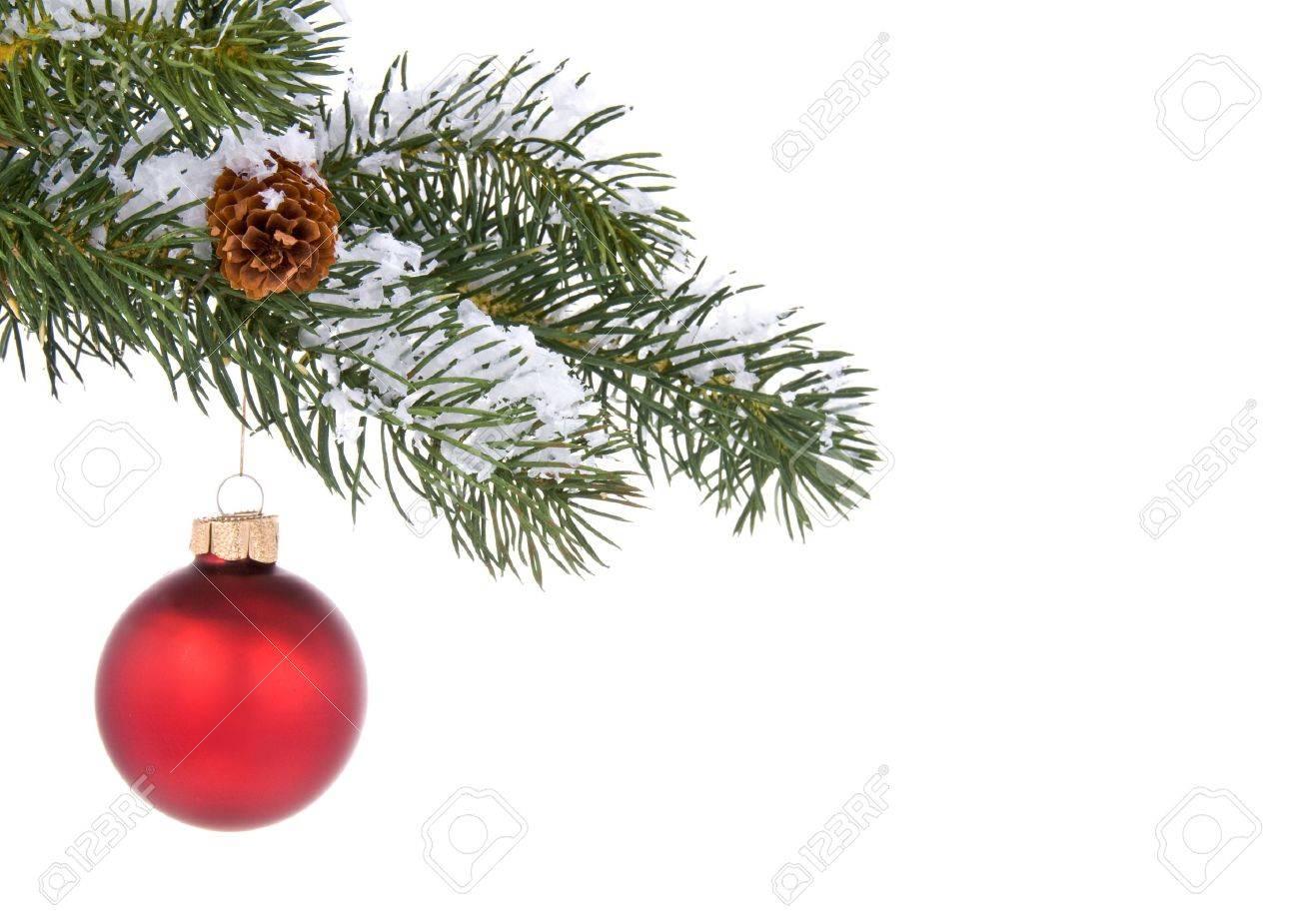Weihnachtsbaum Ast.Stock Photo