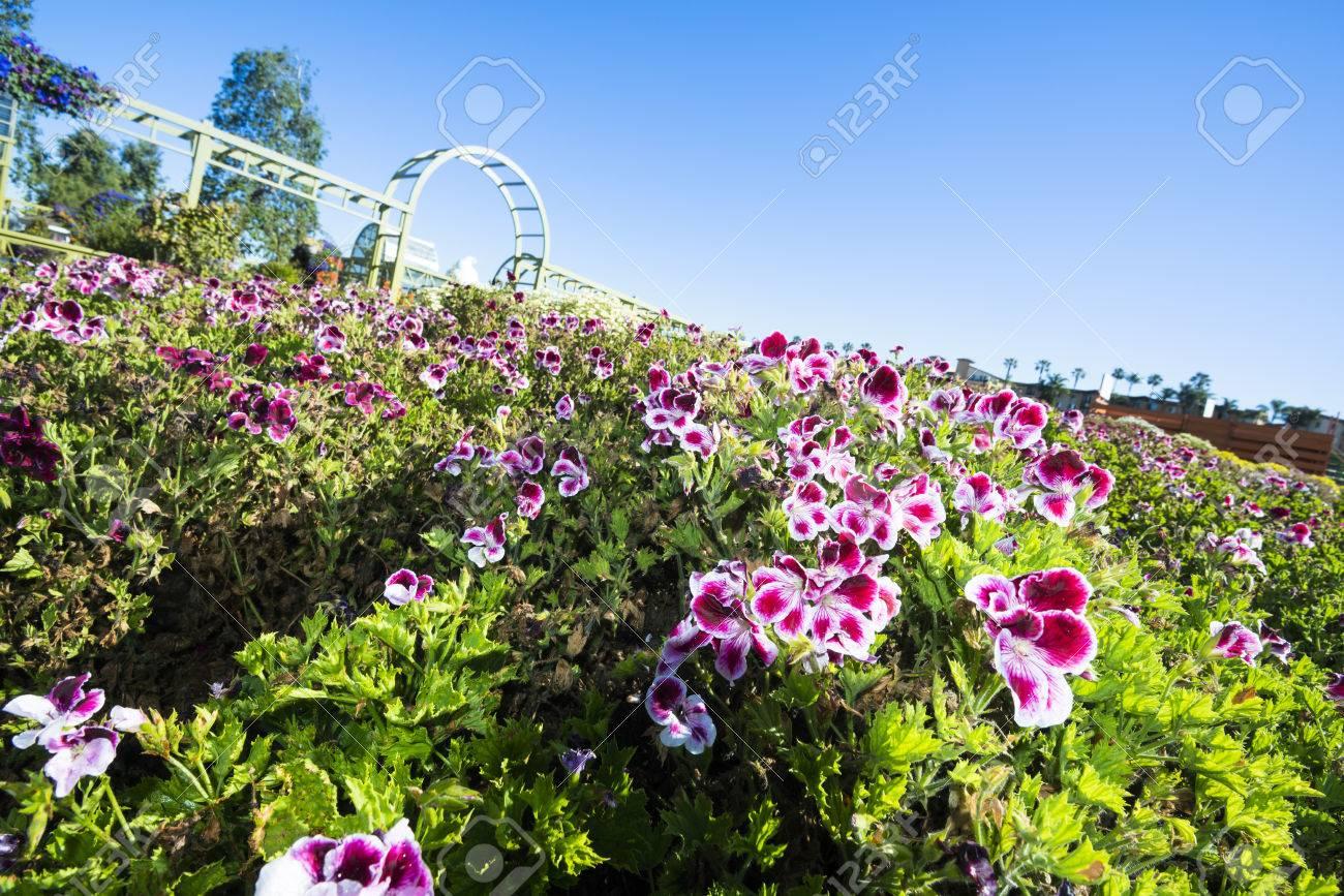 花畑の画像