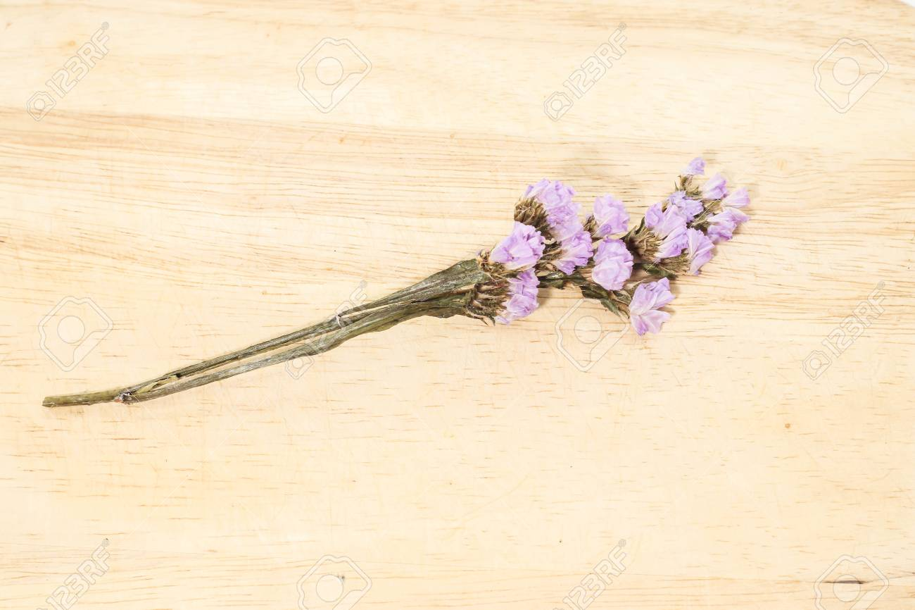 Close Up Of Single Purple Statice Flower Background Use For Stock