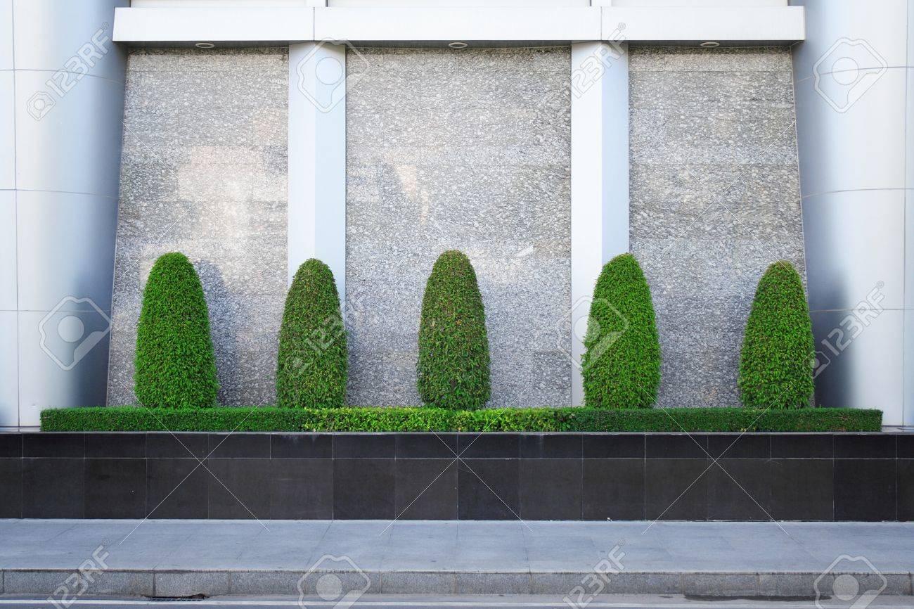 Dekorative banyan bäume und sträucher pflanze werden in dem kleinen garten in der nähe moderner wand