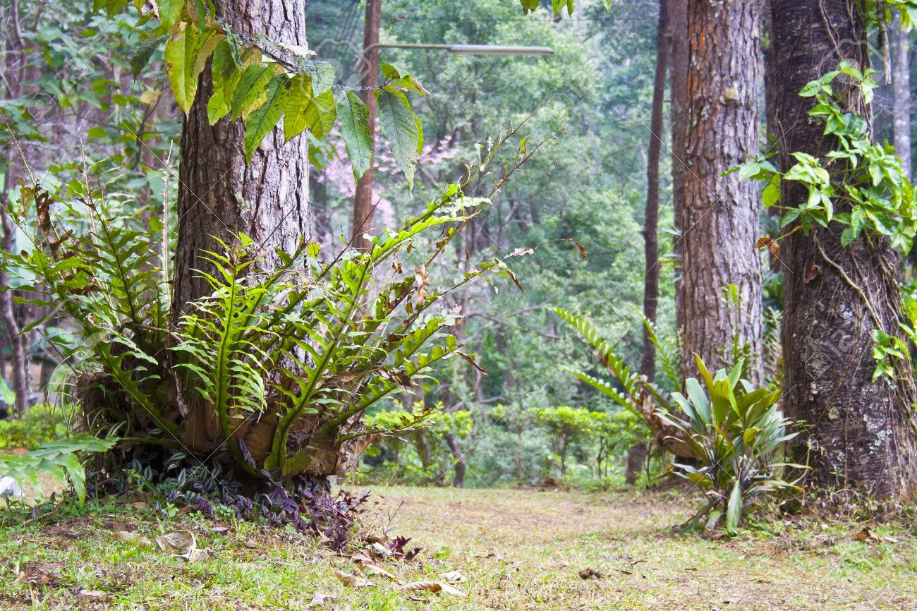 Tropical plant in Thai national park Stock Photo - 13577575