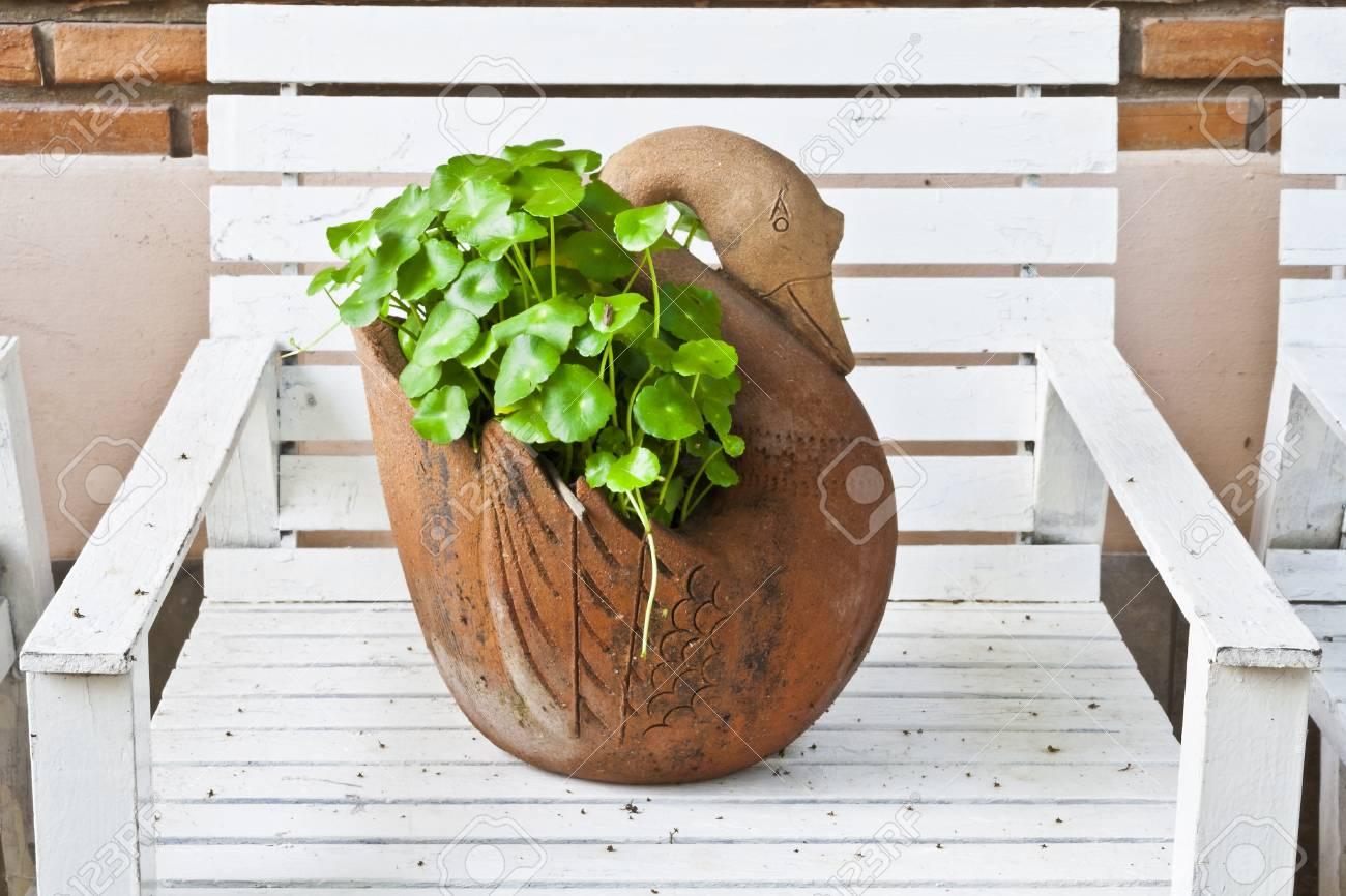 pflanze im blumentopf auf holz stuhl lizenzfreie fotos, bilder und