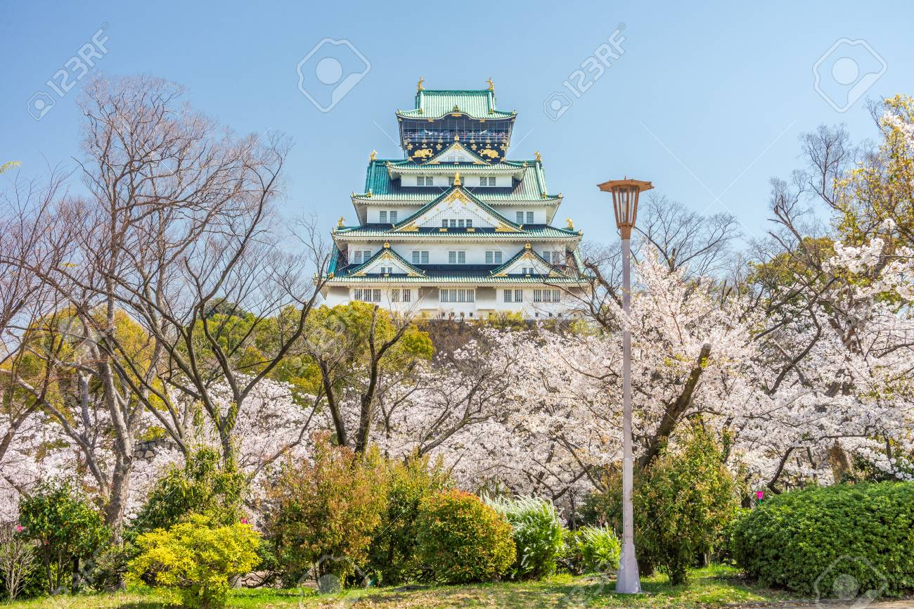 Main tower of Osaka Japanese Castle view from Sakura Nishinomaru Garden. The old heritage building