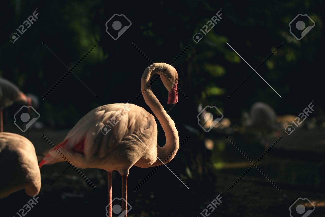 il più grande uccello naturale