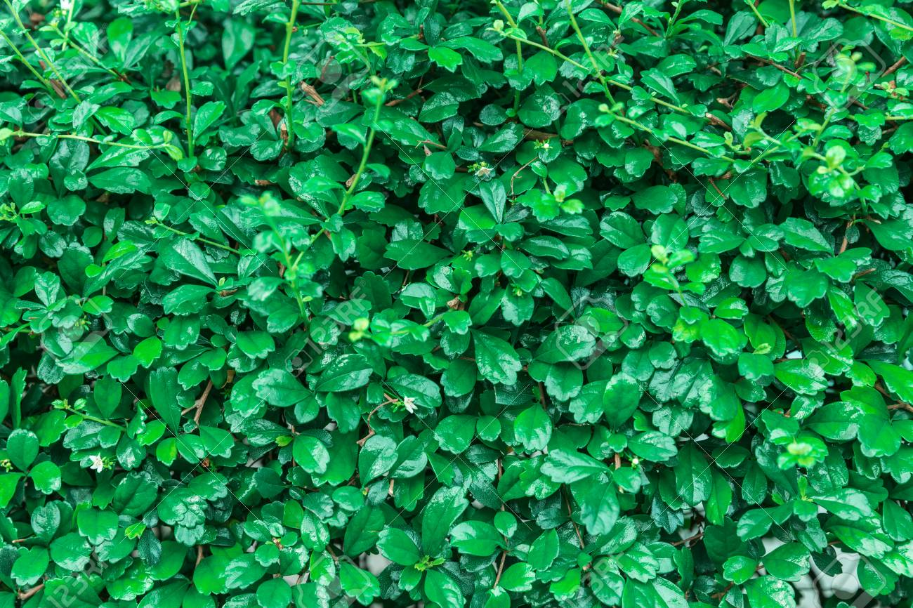 Close Up A Small Plant Greenery Background Texuture Wallpaper