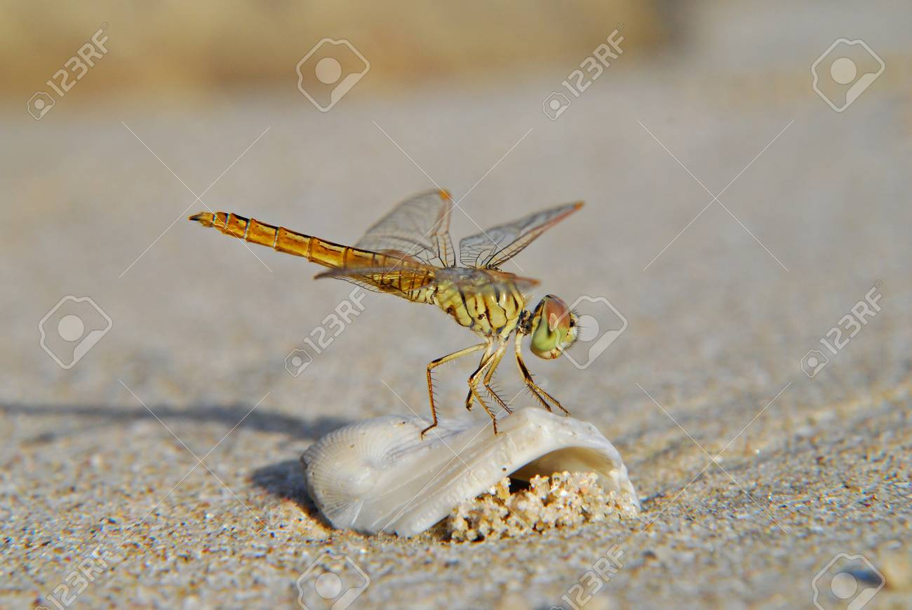 Dragonfly Stock Photo - 14623795