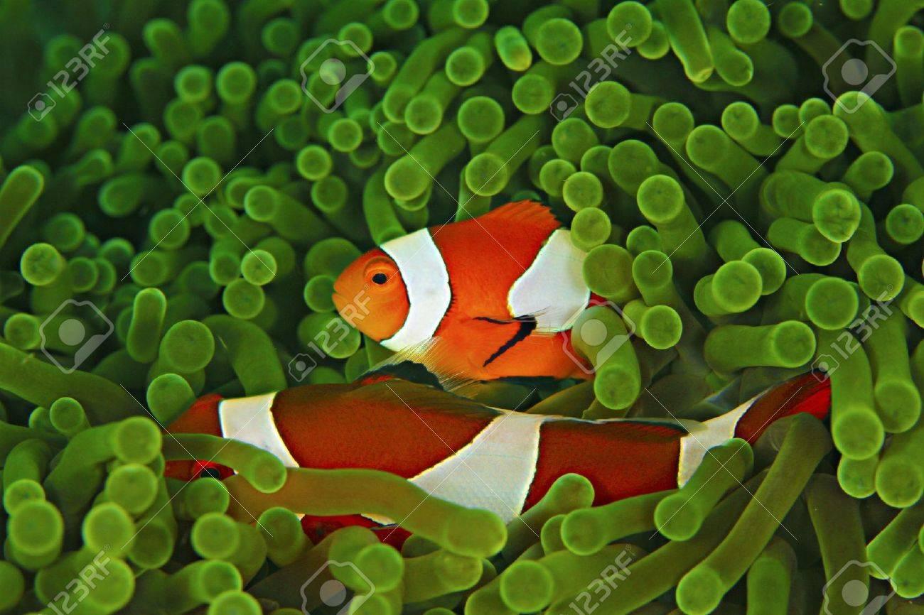 Anemone and Nemo - 15305198
