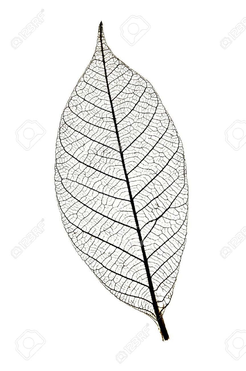 Texture Leaf Skeleton