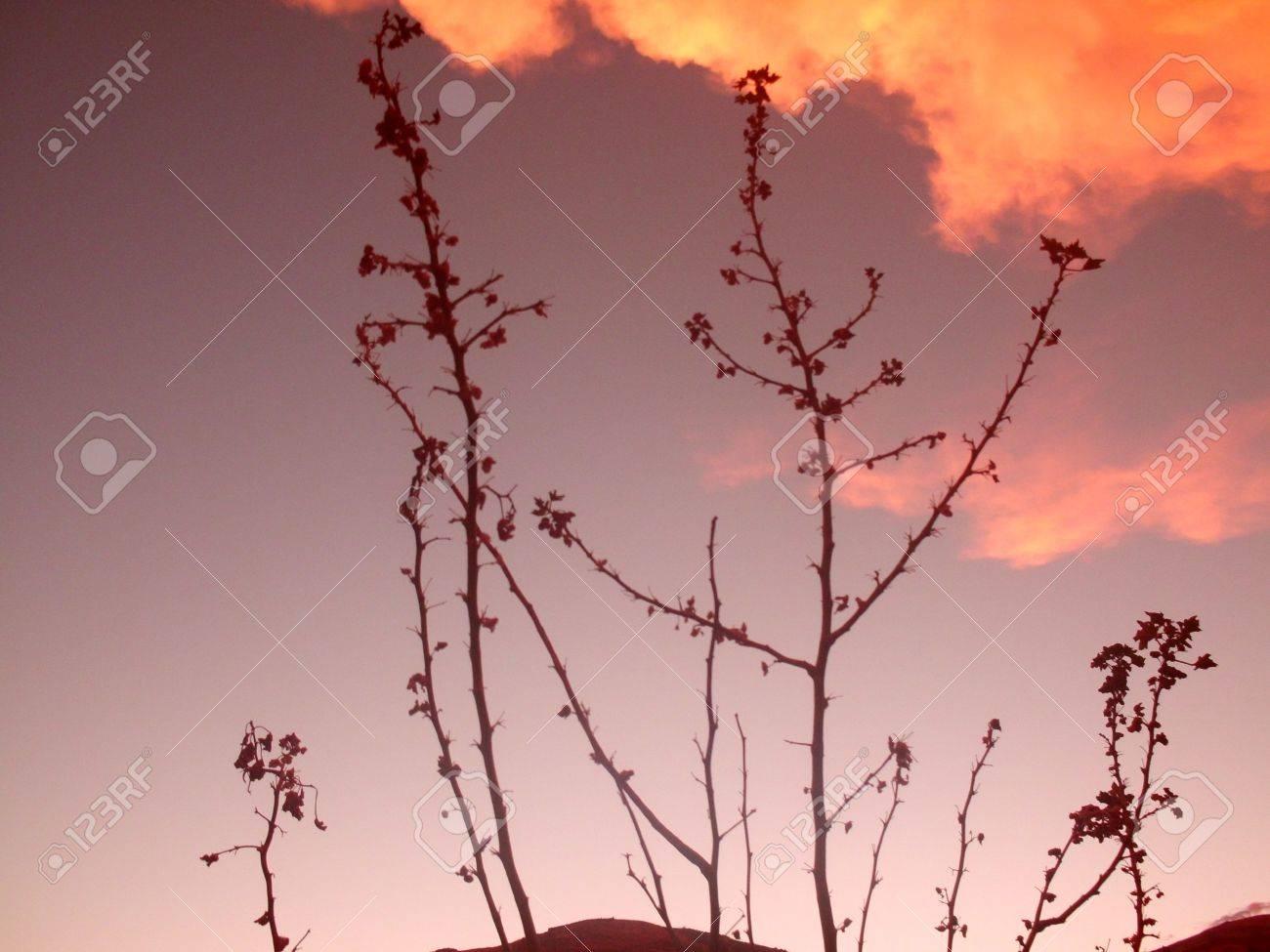 splendor of twilight Stock Photo - 15571234