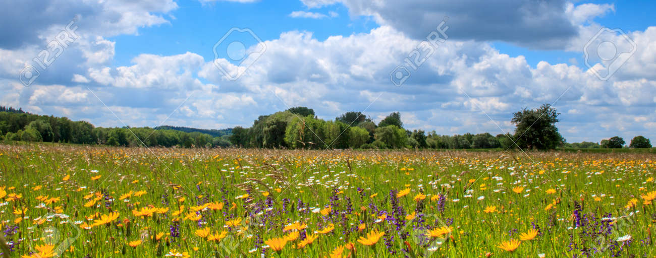 field of spring flowers and perfect sky - 157899874
