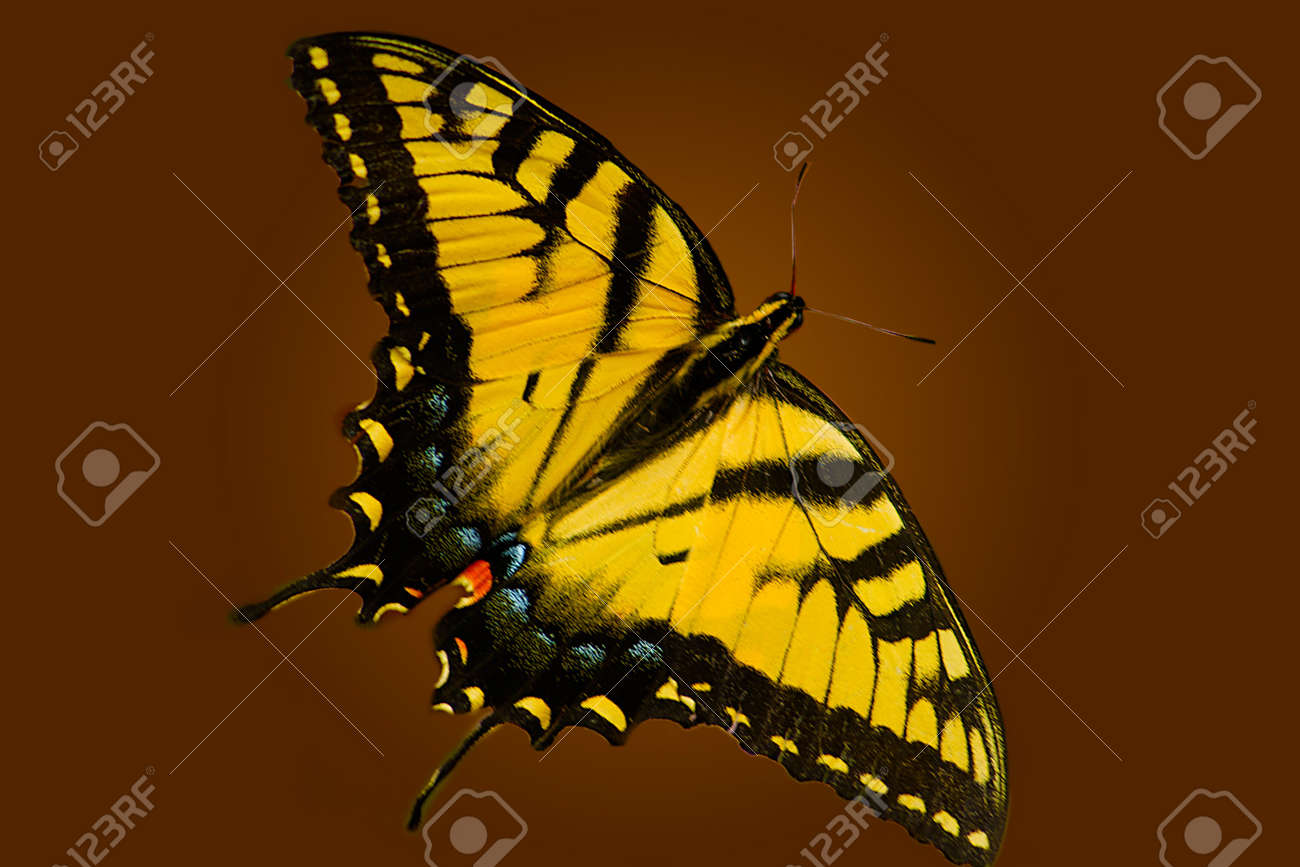 Yellow butterfly sitting on a flower in the garden Stock Photo - 7096514