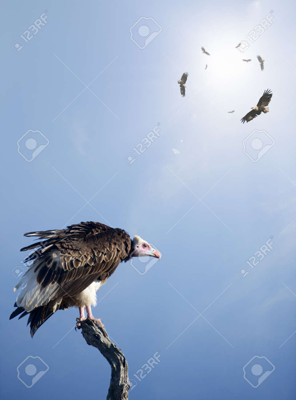 Conceptual - Vultures waiting to prey on innocent victims (digital composite) Stock Photo - 10223673