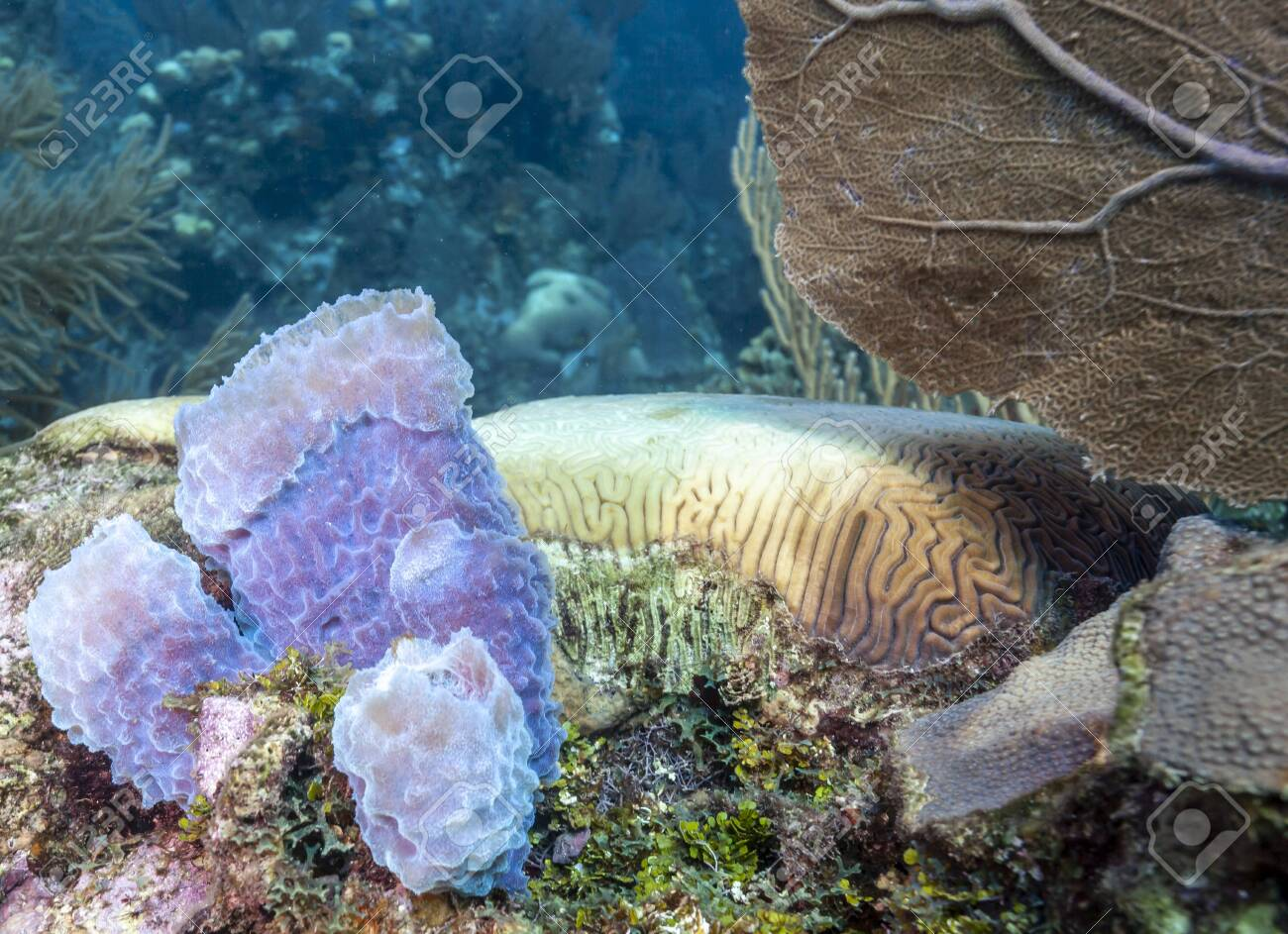 Coral garden in Caribbean off the coast of the island of Raotan - 124540671