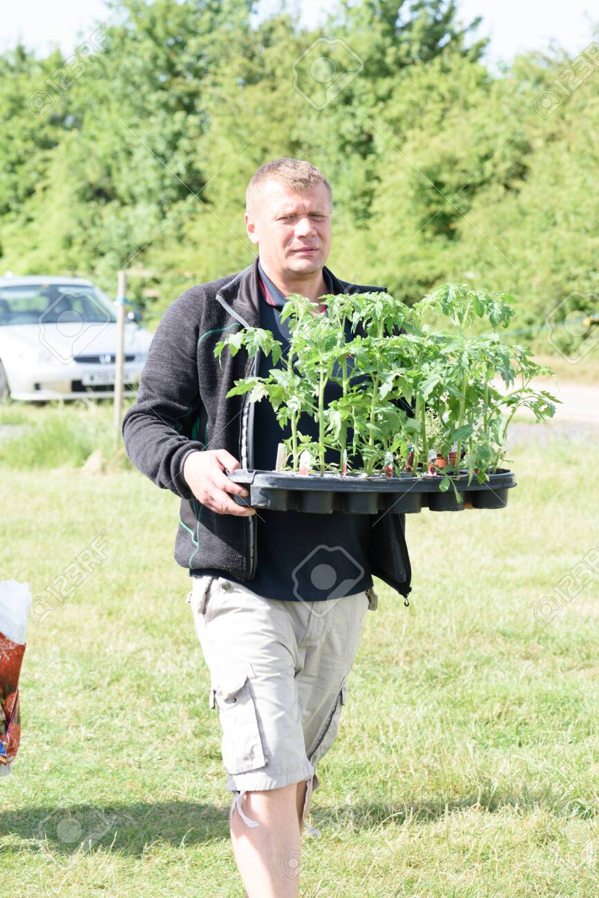 CHELMSFORD, ESSEX/ENGLAND - 1ST JUNE 2019 - A man visiting a car boot sale in Boreham Essex and buying tomato plants seedlings during the summer of 2019 - 143725278