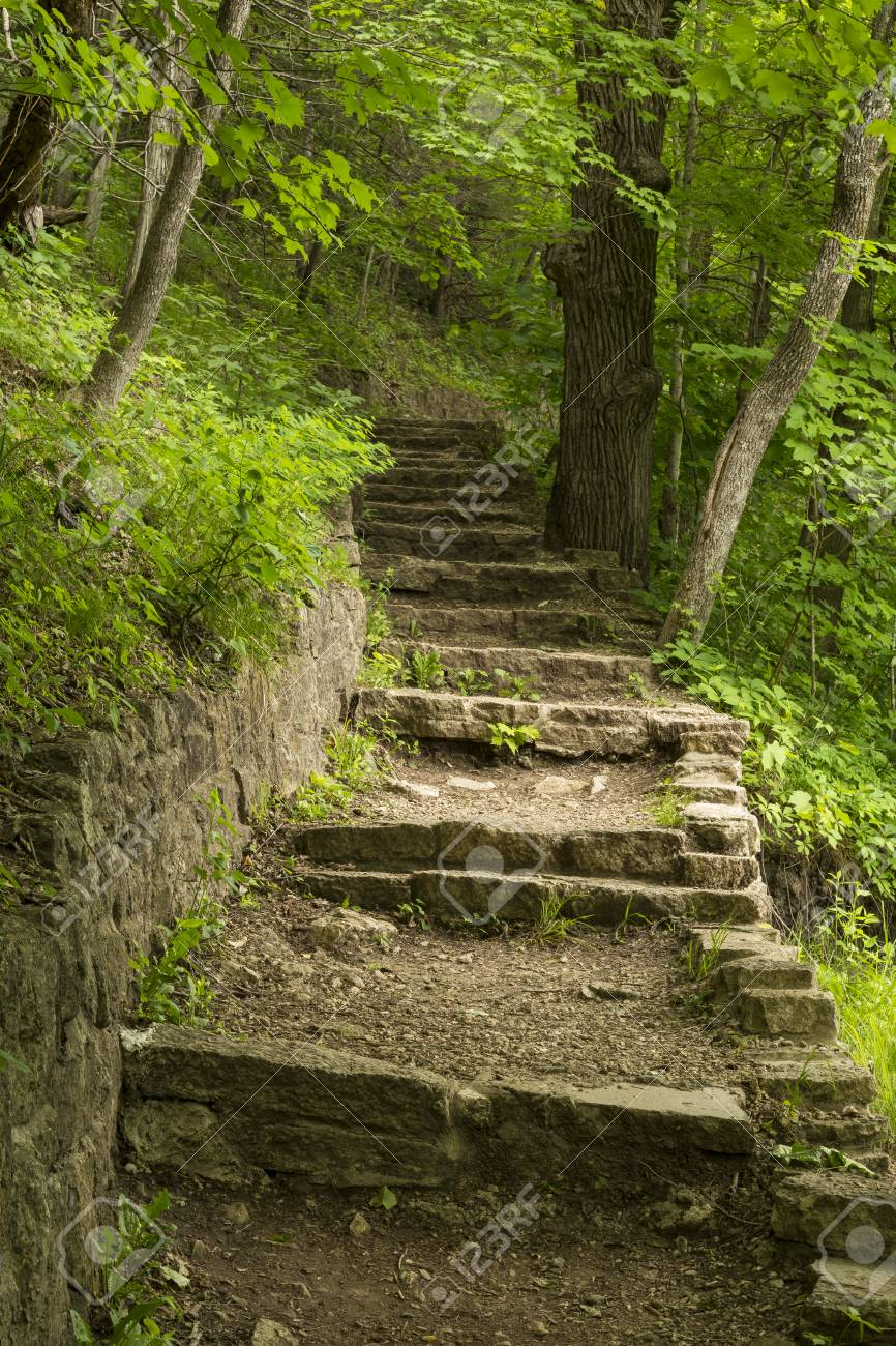 Stone Step Trail In Woods - 39179778