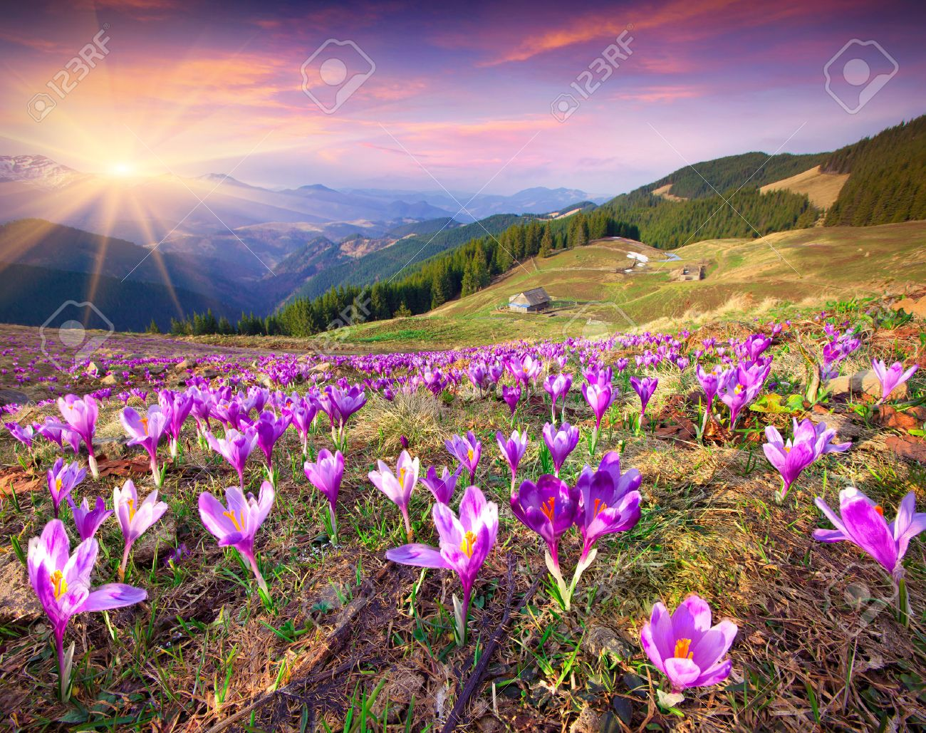 spring images u0026 stock pictures royalty free spring photos and