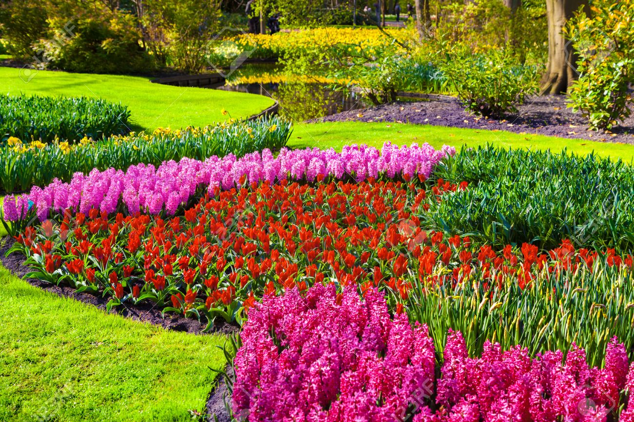 Best of beautiful scenery images with flowers marvellous flowers in the keukenhof park beautiful outdoor scenery in netherlands europe stock izmirmasajfo Images