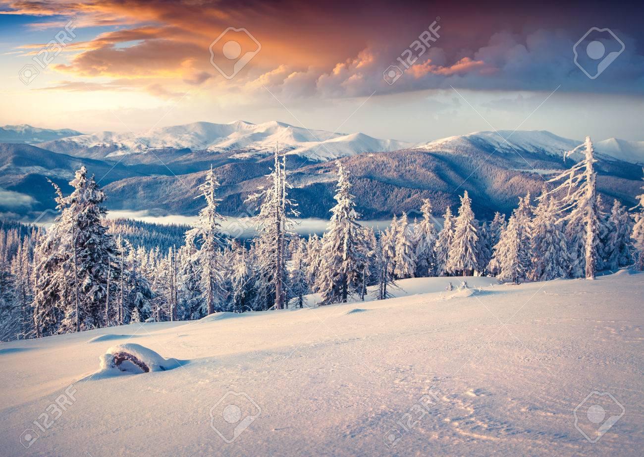 Colorful winter sunrise in the Carpathian mountains. Svydovets ridge, Ukraine, Europe. - 44903032