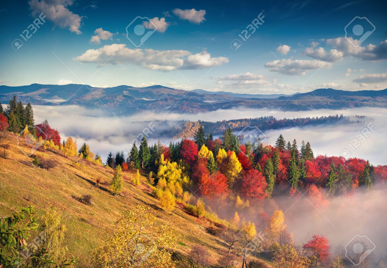 colorful autumn morning in the carpathian mountains sokilsky