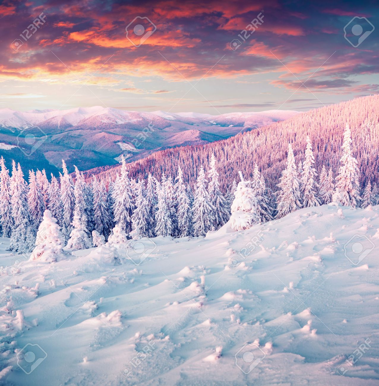 Colorful winter sunrise in the Carpathian mountains. Gorgany ridge, Ukraine, Europe. - 45243830