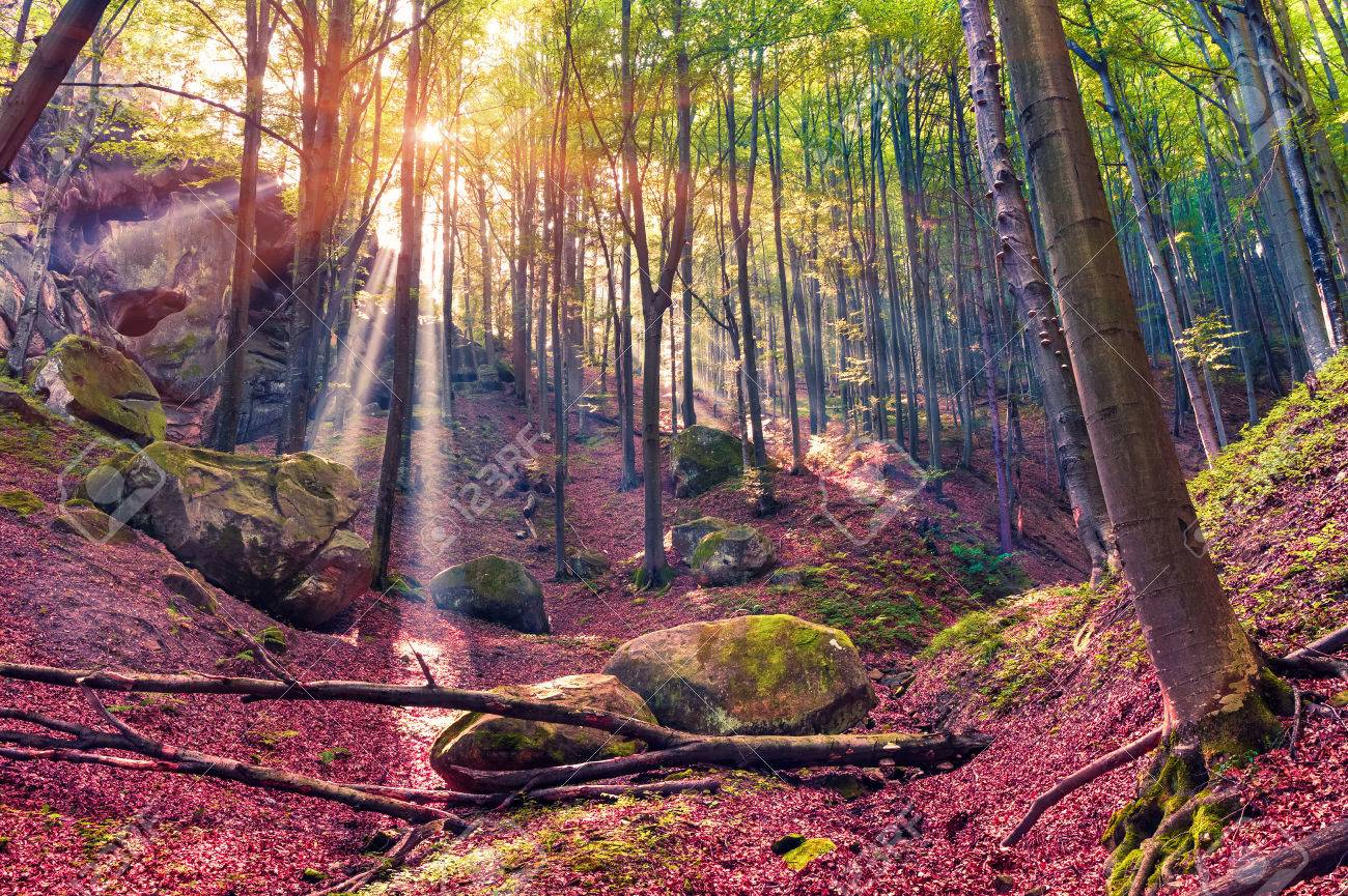 Autumn morning in mystical woods. - 45243840