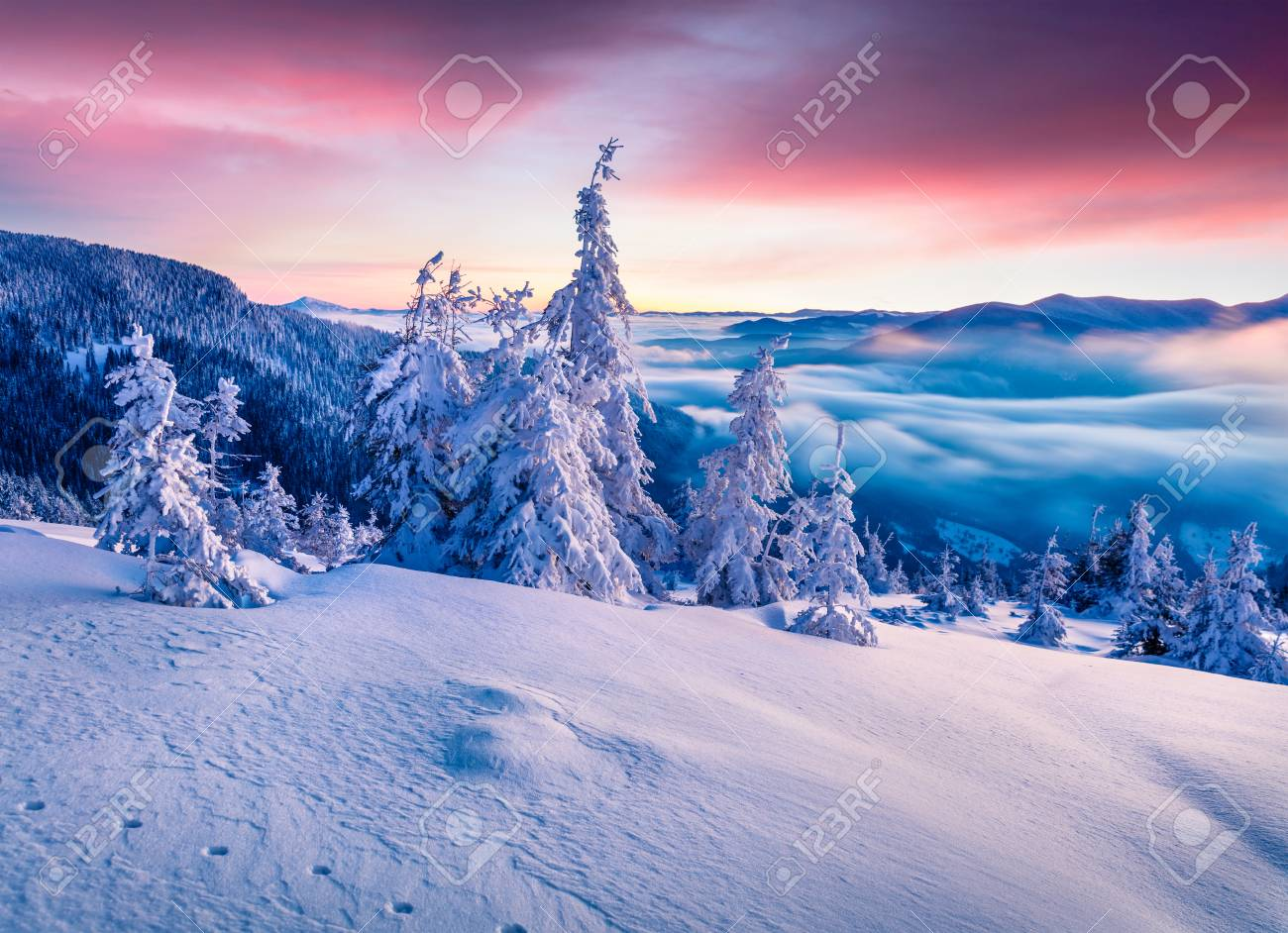 Splendid winter sunrise in Carpathian mountains with snow covered fir trees. Colorful outdoor scene, Happy New Year celebration concept. Artistic style post processed photo. - 89424452