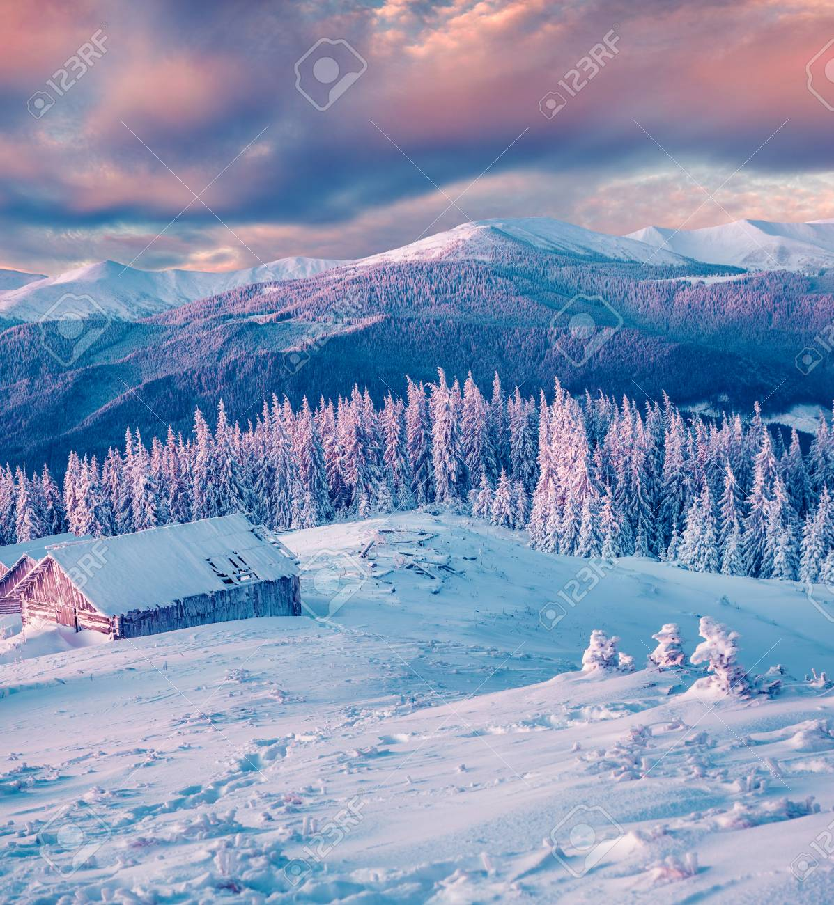 Magnificent winter sunset in mountain forest with snow covered fir trees. Colorful outdoor scene, Happy New Year celebration concept. Artistic style post processed photo. - 116551569