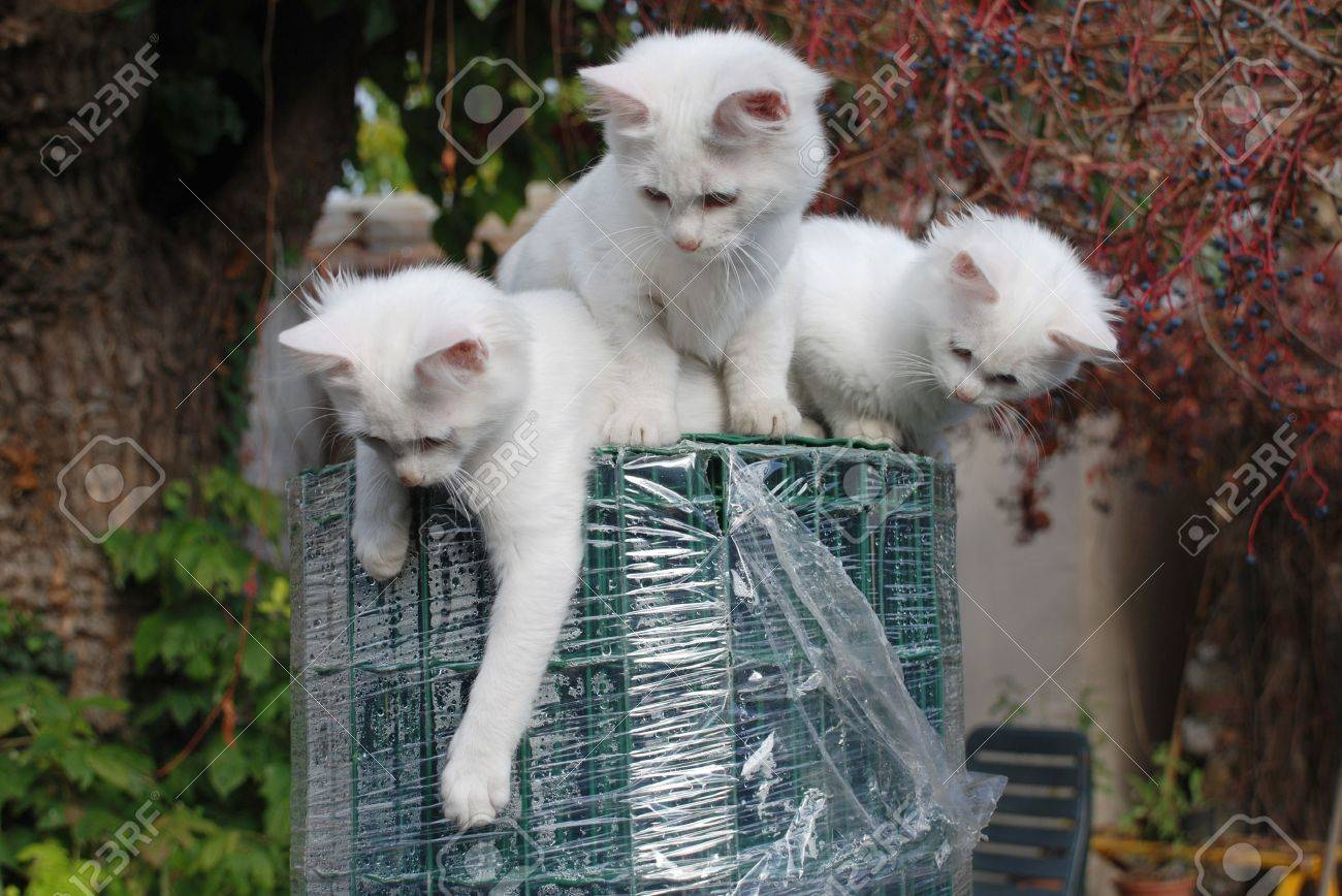 Three 14 Week Old Playful Kittens On Top Of A Large Roll Of Green ...