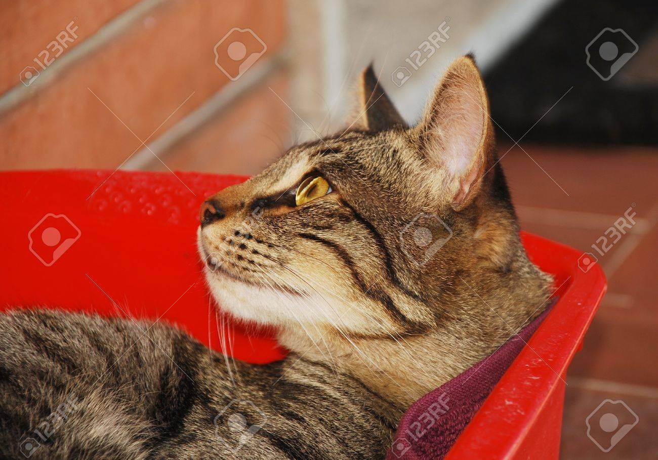 Gatto che si siede sulle mattonelle nel giardino con erba su