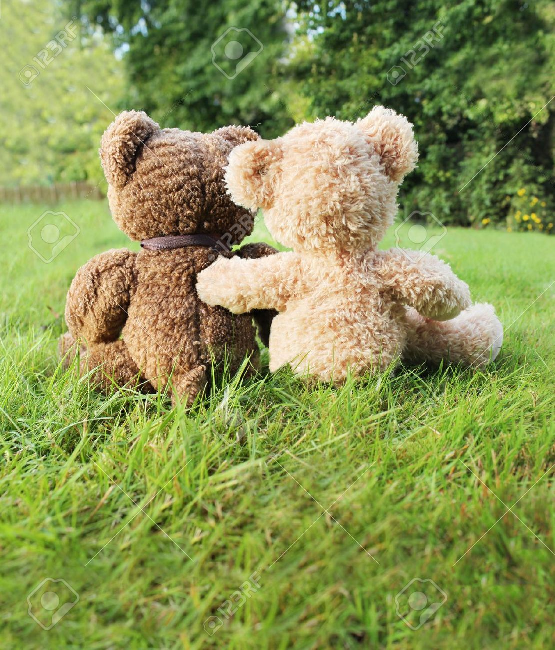 Two teddy bears in love sitting on grass Stock Photo - 7693797