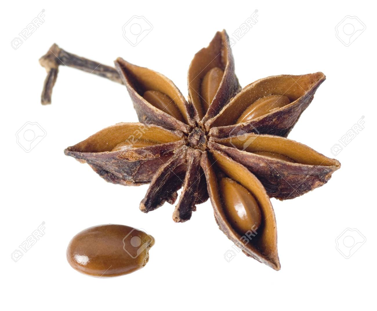 Star anise with seed isolated on white background Stock Photo - 1518751