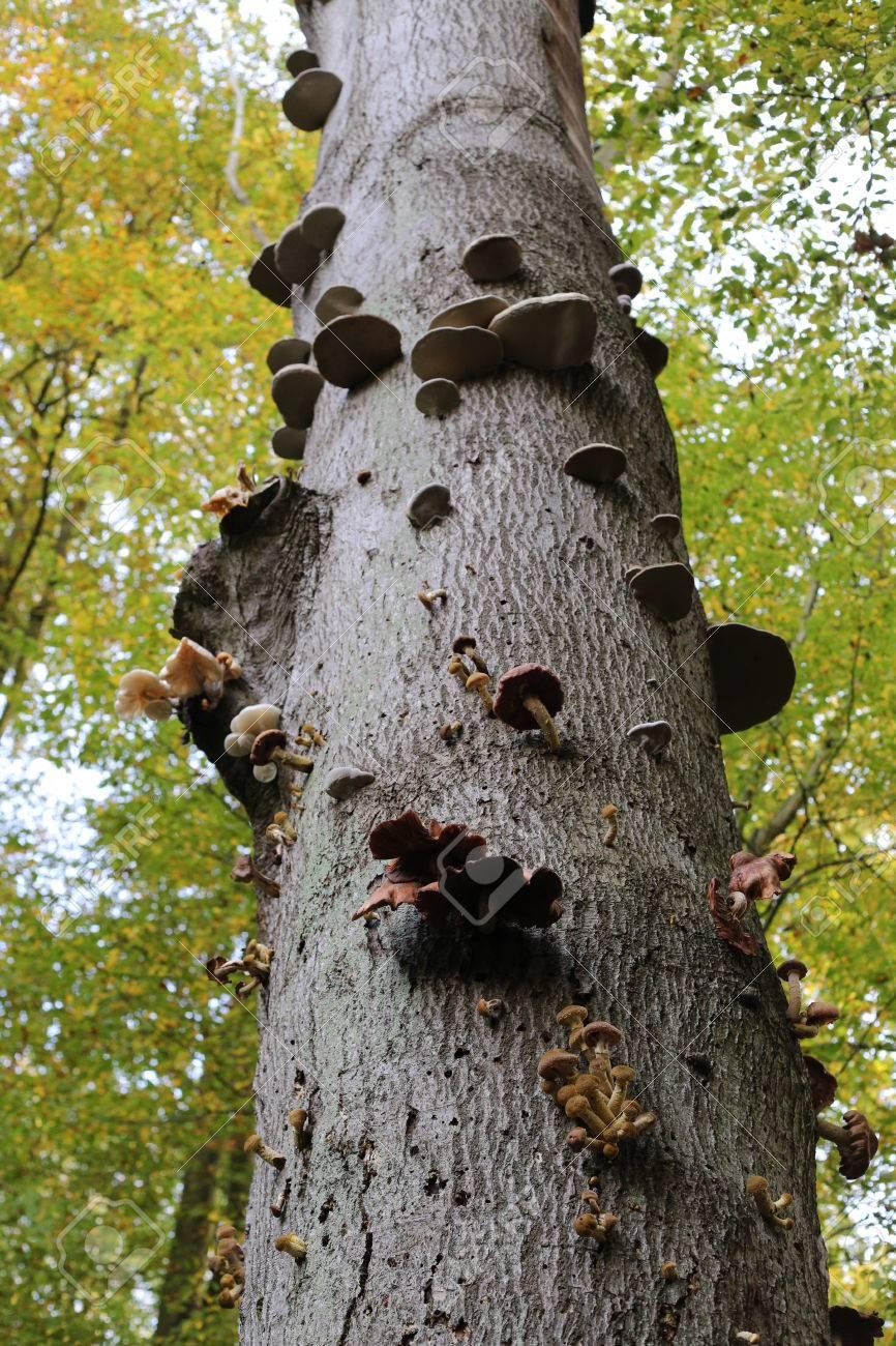 esempi di funghi parassiti