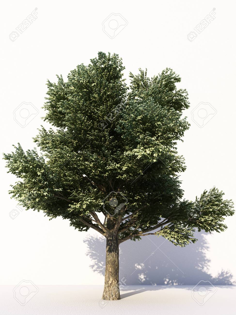 Trees isolated on white background, tropical trees isolated used for design, advertising and architecture. 3d rendering - 133134612