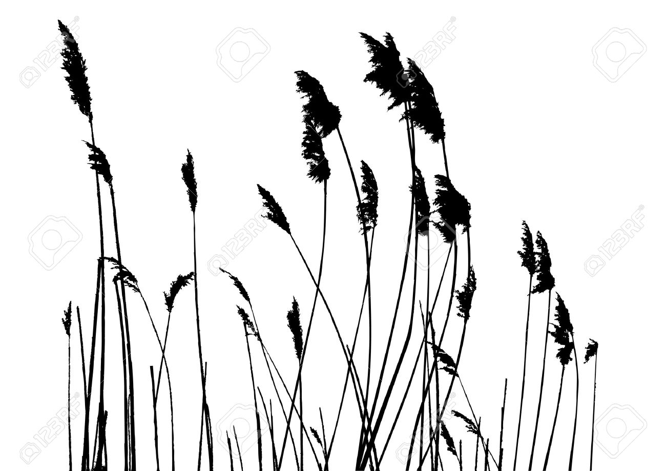 real grass silhouette - vector - two colors Stock Vector - 4835118