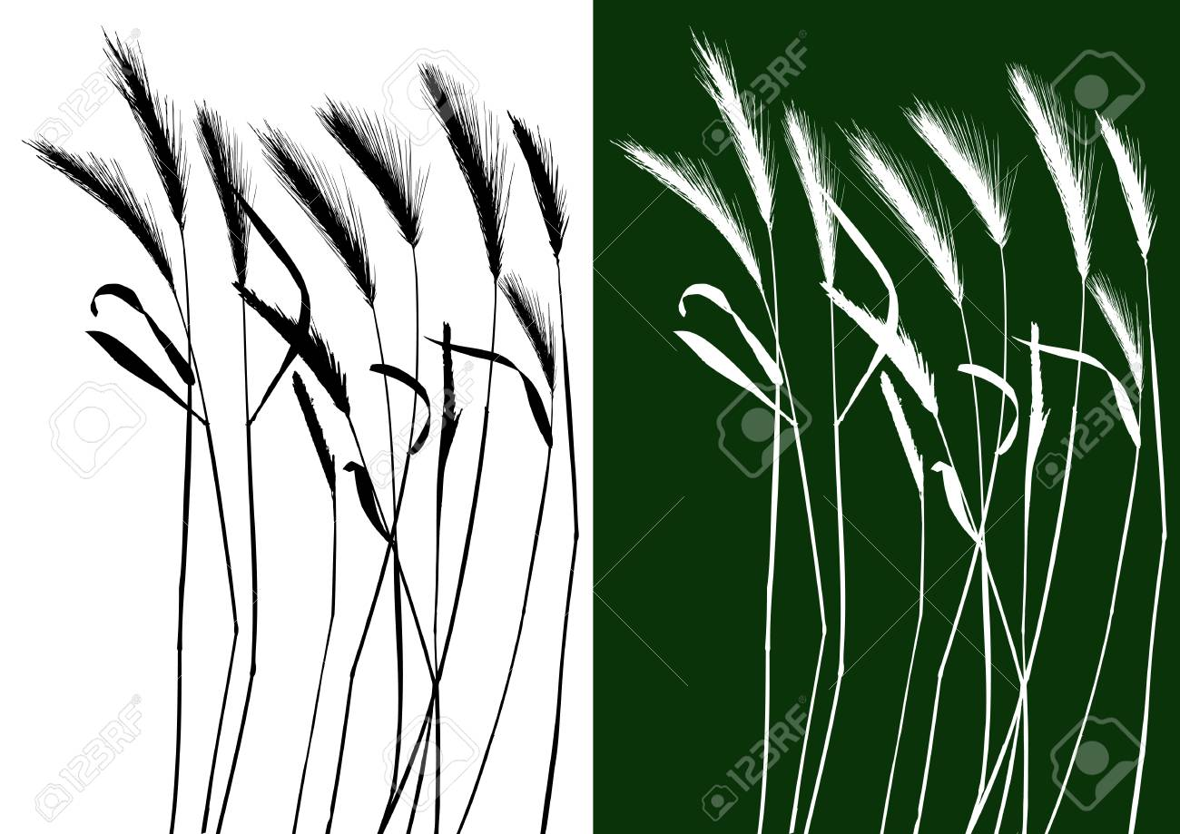 Set of vector grass silhouettes backgrounds for design use Stock Vector - 4966405