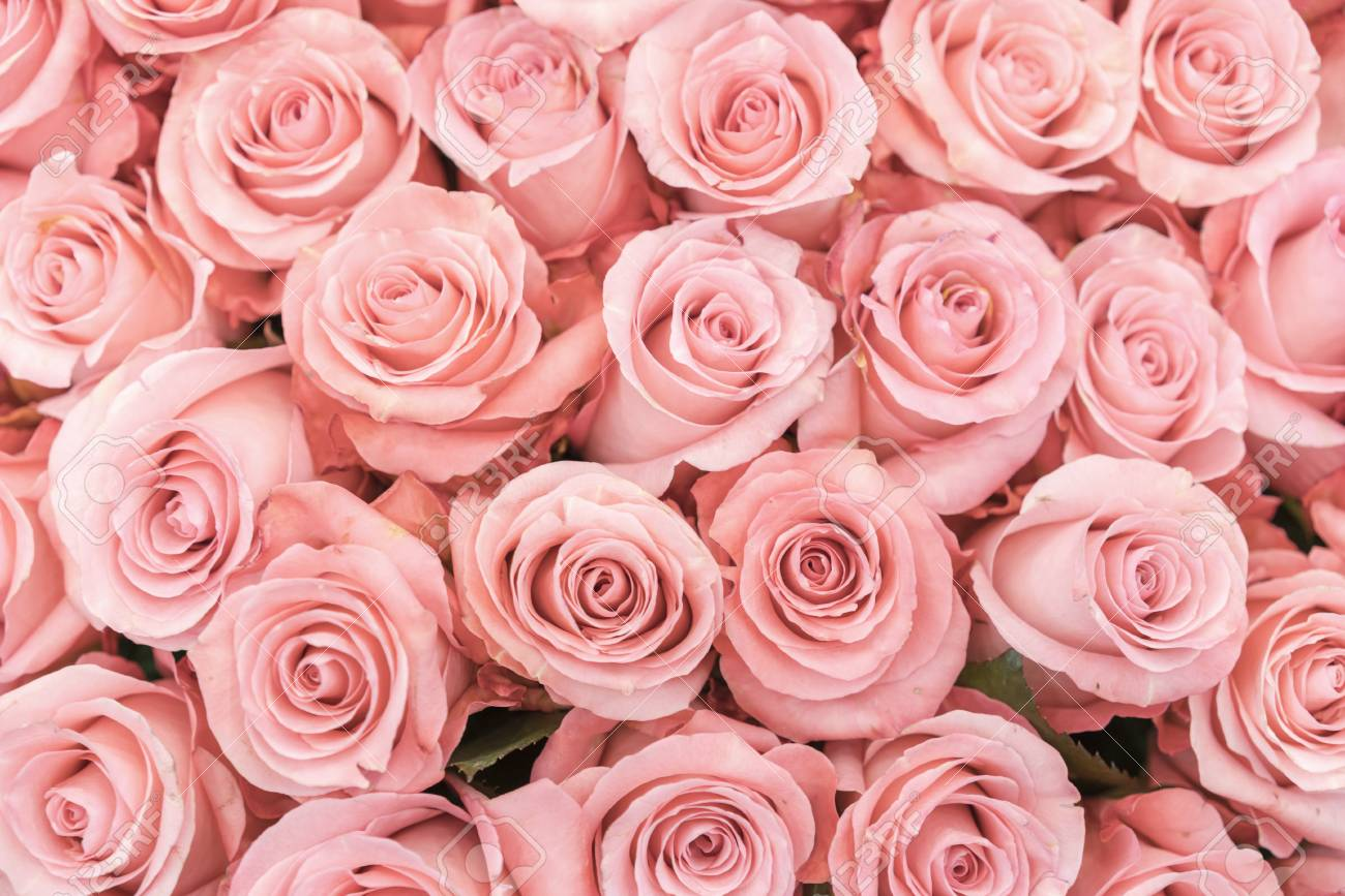 Background of pink orange and peach roses. Fresh pink roses. A huge bouquet of flowers. The best gift for women. - 121181156