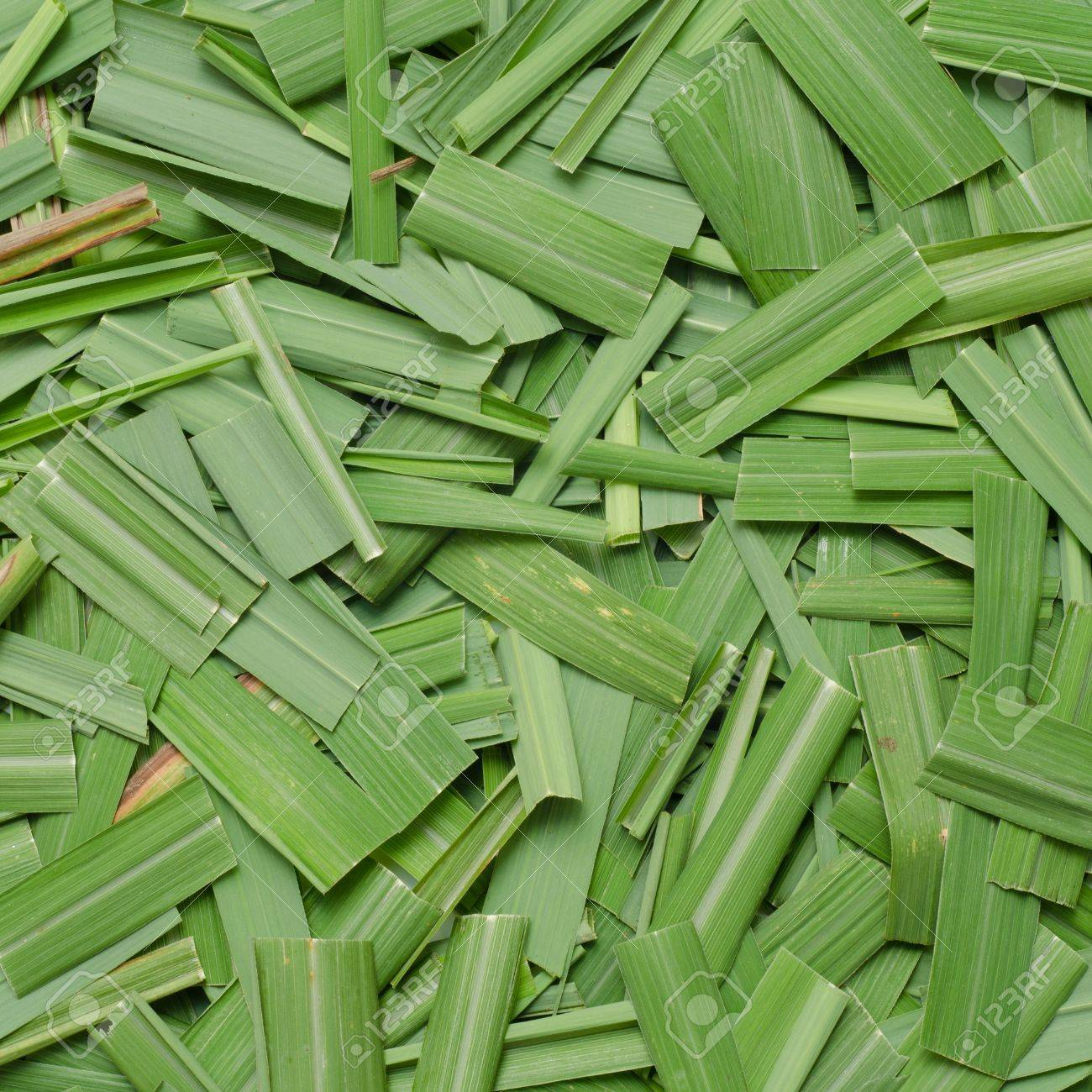 Citronella Grass Leaves Background Stock Photo Picture And