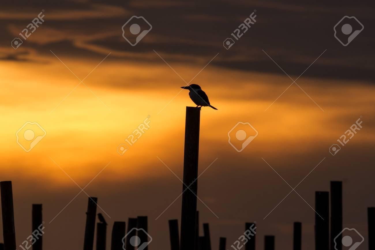 kingfisher silhouette stock photo 35919656